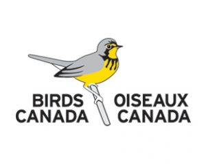 Job Posting: Conservation Engagement and Communications Officer with Birds Canada // Deadline April 17th